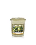 Yankee Candle Doftljus Grapevine & Oak Votivljus